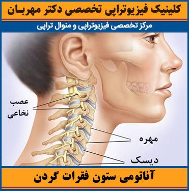 آناتومی ستون فقرات گردن
